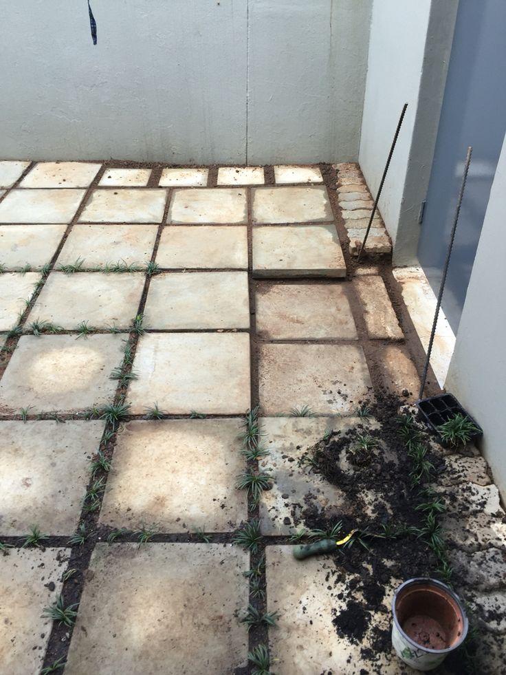 Backyard to Courtyard progress