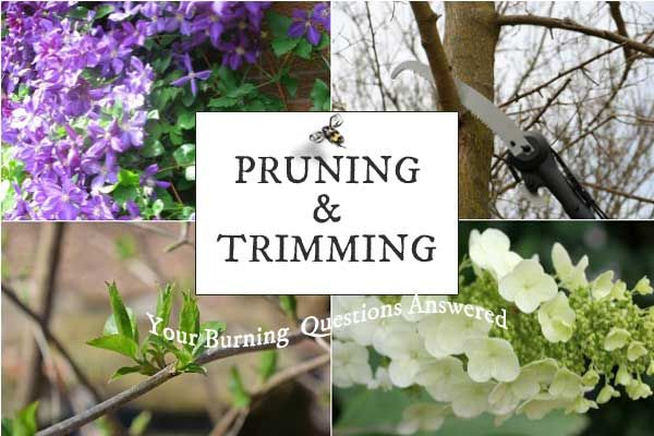 Looking for tips on pruning?  Garden expert, @empressofdirt breaks it down! From pruning hydrangeas, to hard to reach tree branches, she has all of the answers on the benefits of pruning.