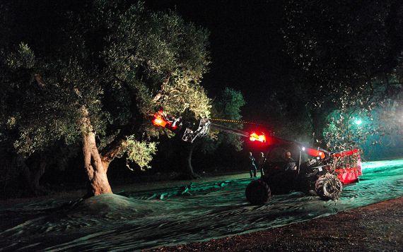 Forestaforte: una secolare passione per l'olivicoltura - Piattoforte