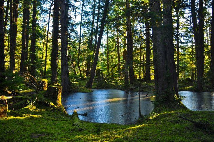 A frozen pond in the rainforest