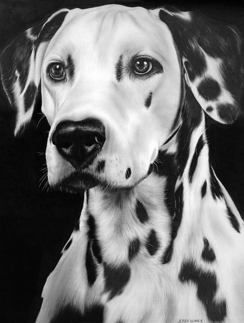 Dalmation Print By Jerry Winick
