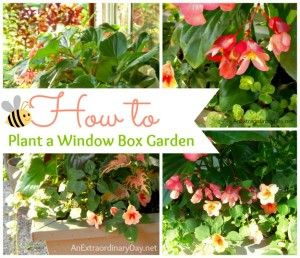 How to Plant a Window Box Garden :: Tutorial & Planting Tips - An Extraordinary Day