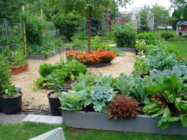 potager and herb garden vegetable - Kitchen Garden Design