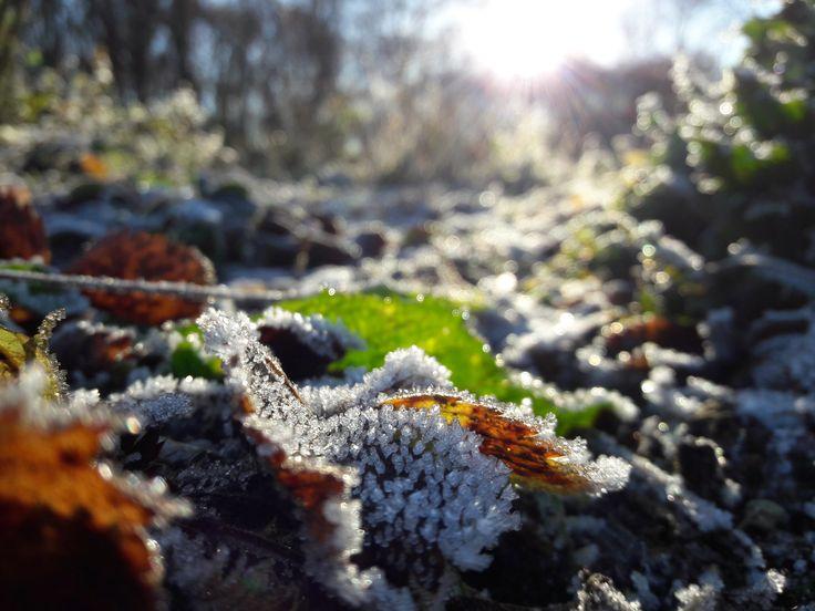 #winter #frozen