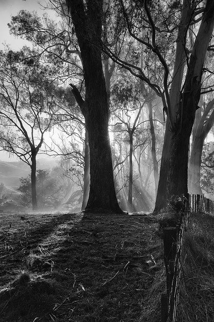 Misty Mornings by J Howe, via Flickr - Misty Mornings from our East Cape Road Trip - Images and thoughts on Leica gear, Film vs. Digital, B and much more. Also includes 7 LFI Leica Fotografie International Master Shots. - http://www.aperturepriority.co.nz/2012/07/17/the-east-cape-road-trip/