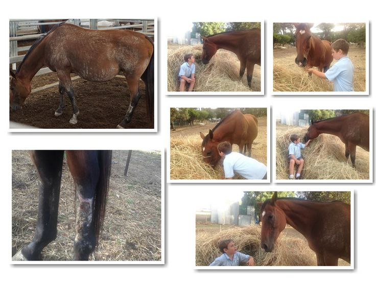 You make a difference by donating so we can continue in rescuing horses just like Mary