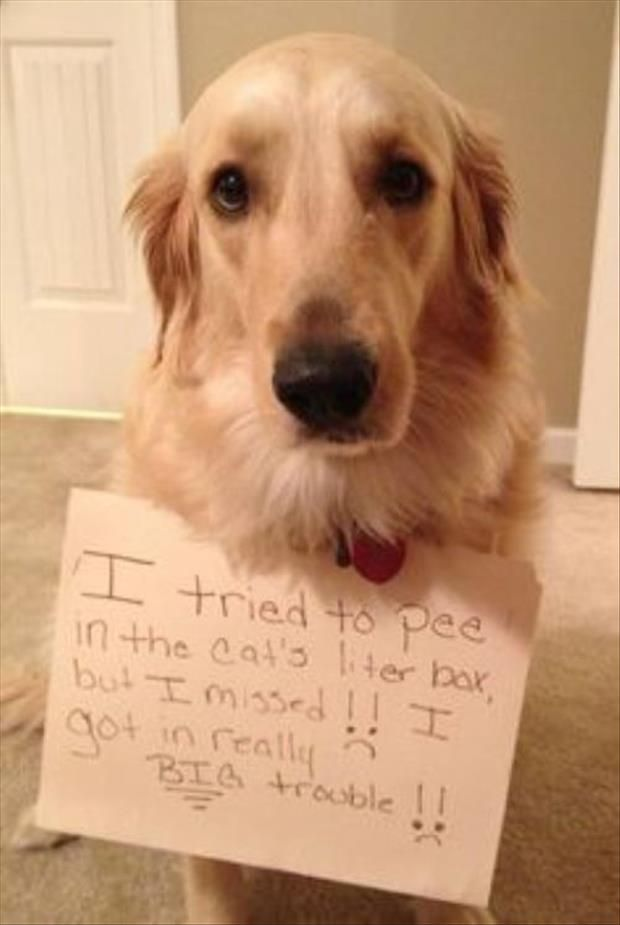 Best Pet Shaming Pics Images On Pinterest Adorable Animals - 32 adorable animals