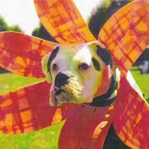 lill boxer dog Costume