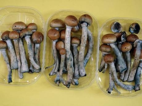 A study, at Johns Hopkins University found a single dose of psilocybin, the active ingredient in magic mushrooms, was enough to cause positive effects for up to a year