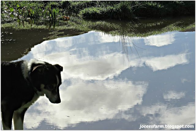 Summer Reflections @ Jocees Farm