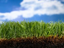 8 secrets on fall overseeding. Restore your #lawn before winter hits! #lawncare #grass