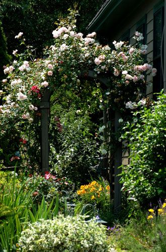 Side Yard Privacy Ideas | Climbing roses are nice over archways. The climbing roses in this ...