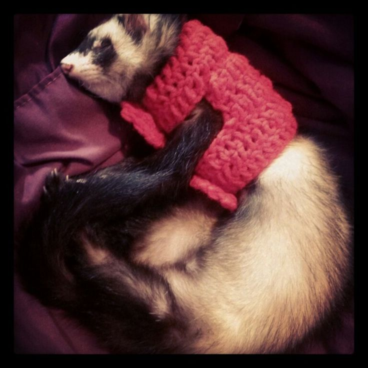 Ferret in a handmade crochet sweater