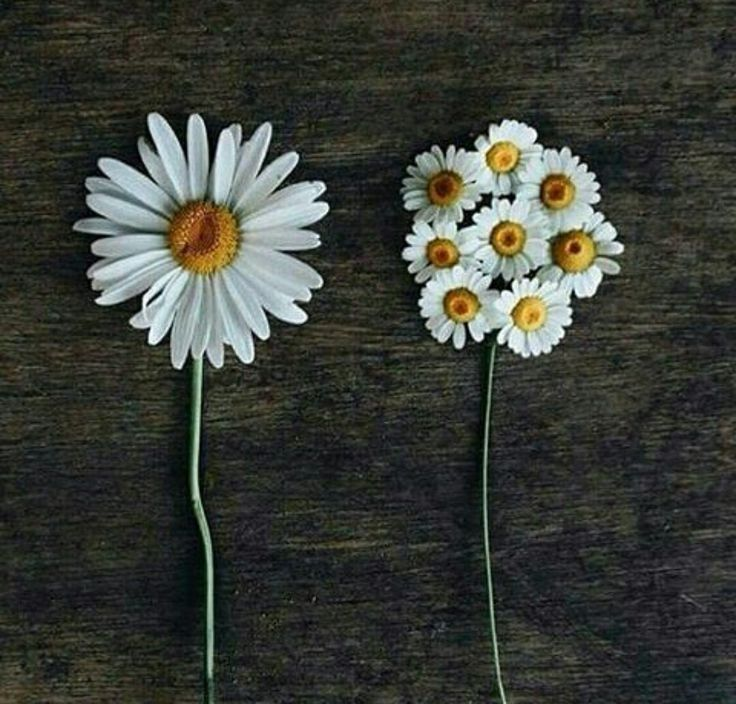 17 Best Ideas About Daisy Wallpaper On Pinterest HD Wallpapers Download Free Images Wallpaper [1000image.com]