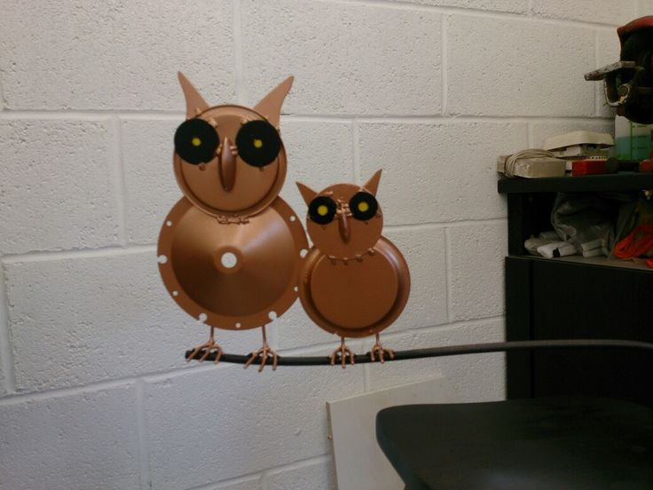 Owl's on branch