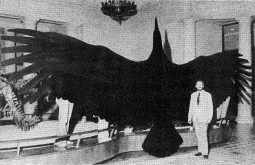 """In 1980 the bones of a bird with a wingspan of twenty-five feet were found in Central Argentina. It has been named the """"Magnificent Argentine Bird"""" AKA """"Argentavis magnificens."""" It is estimated to be about eight million years old. This species is the largest flying bird discovered. So far...    Kenneth E. Campbell, (one of the discoverers,) stands in front of a silhouette of the """"Magnificent Argentine Bird."""" And yes, this is to scale...This is on display at the Natural History Museum in Los…"""