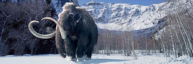 Giganten uit de IJstijd toont de angstaanjagende sabeltandtijgers, reusachtige grondluiaards en iconische wolharige mammoeten die leefden in de IJstijd.