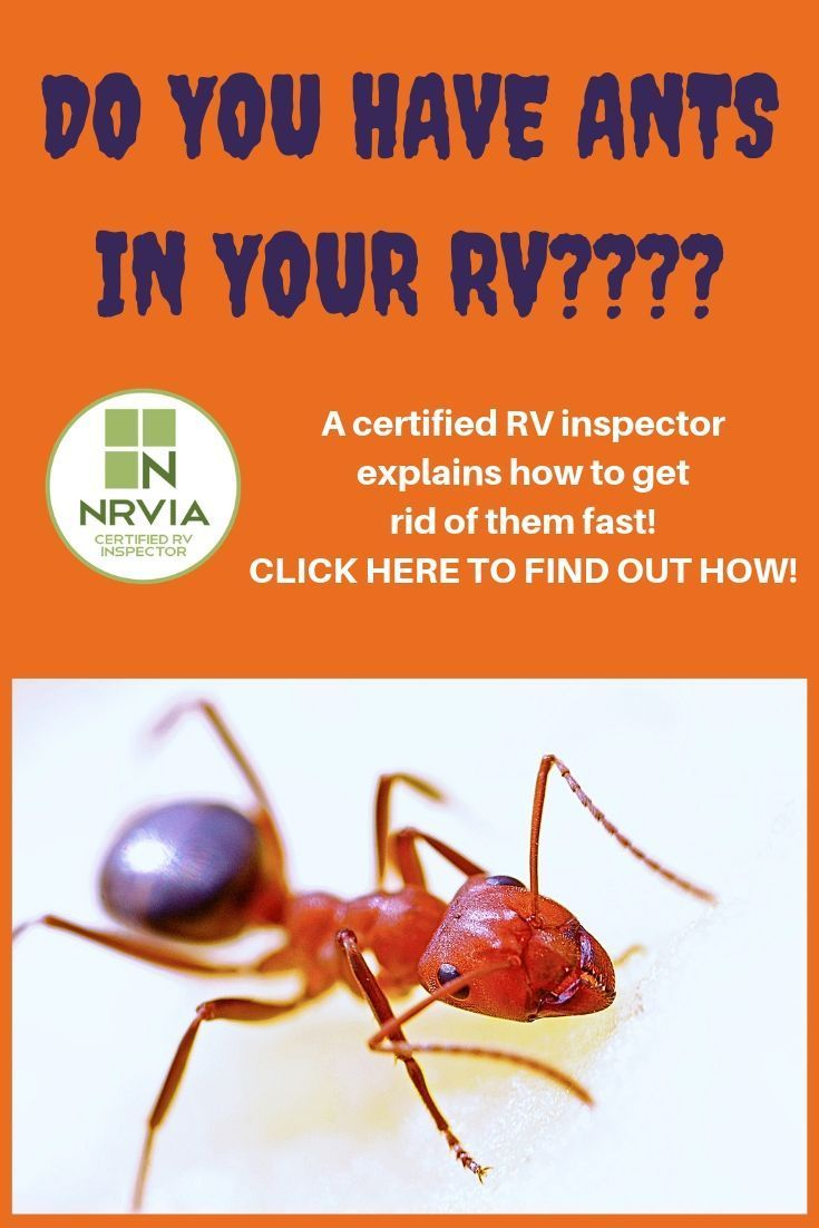 Find out how to get rid of rv ants fast a certified rv