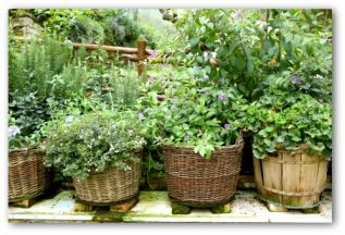 Line a basket with a black trash bag, fill with potting soil, cut drainage holes in the trash bag (tip basket, insert knife, poke holes), plant -Note basket will rot out from water in about a year.  Putting the basket on blocks (see picture)  to let air flow underneath keeps it drier.