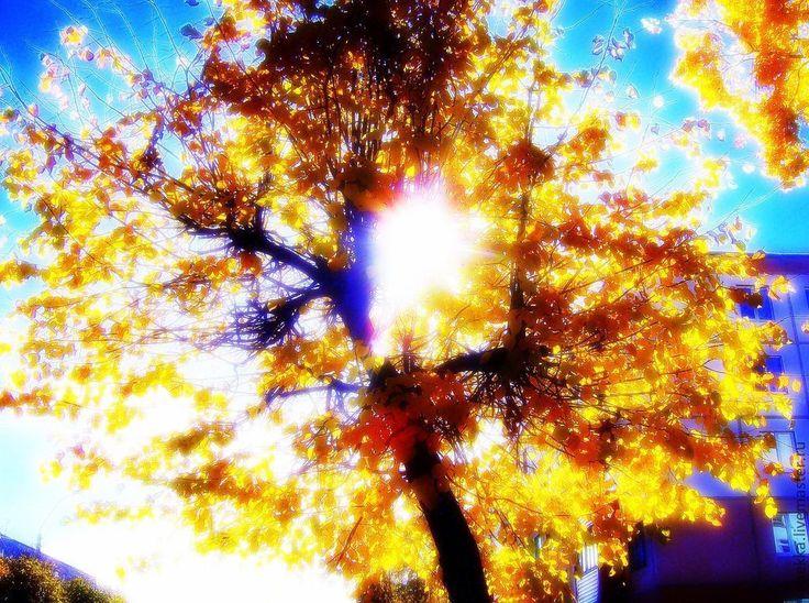 Купить или заказать Фотокартина ' Осеннее солнцестояние.' желтый,ярко- желтый,оранжевый, в интернет-магазине на Ярмарке Мастеров. ФОТОКАРТИНА 'Осеннее солнцестояние' По дороге из школы....Осенний фрагмент, который украсит Ваш интерьер.Фантастическая картина, добавит в Вашу жизнь любви и сияния, помогает медитировать. Фотокартина будет изготовлена в фотостудии на качественной фотобумаге.