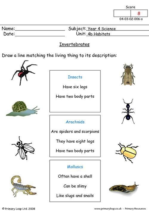 science worksheet invertebrates science printable worksheets. Black Bedroom Furniture Sets. Home Design Ideas