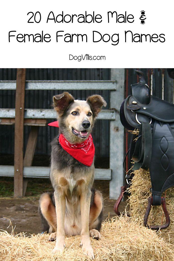 20 Adorable Male And Female Farm Dog Names Dog Names Farm Dogs