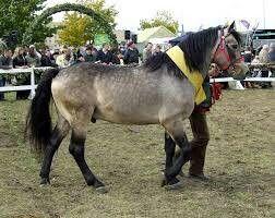Peneia Pony - Greece