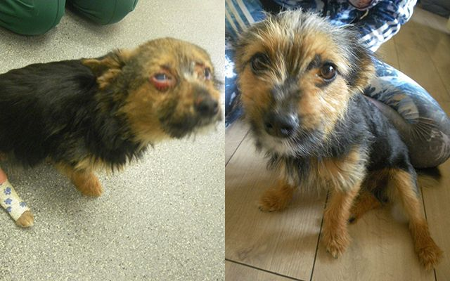 Tiny Pup Survives Being Drugged Beaten And Burned Dog Poor Dog Pup Happy Animals