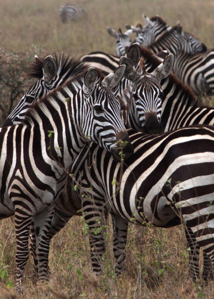 Group hug @Tanzania