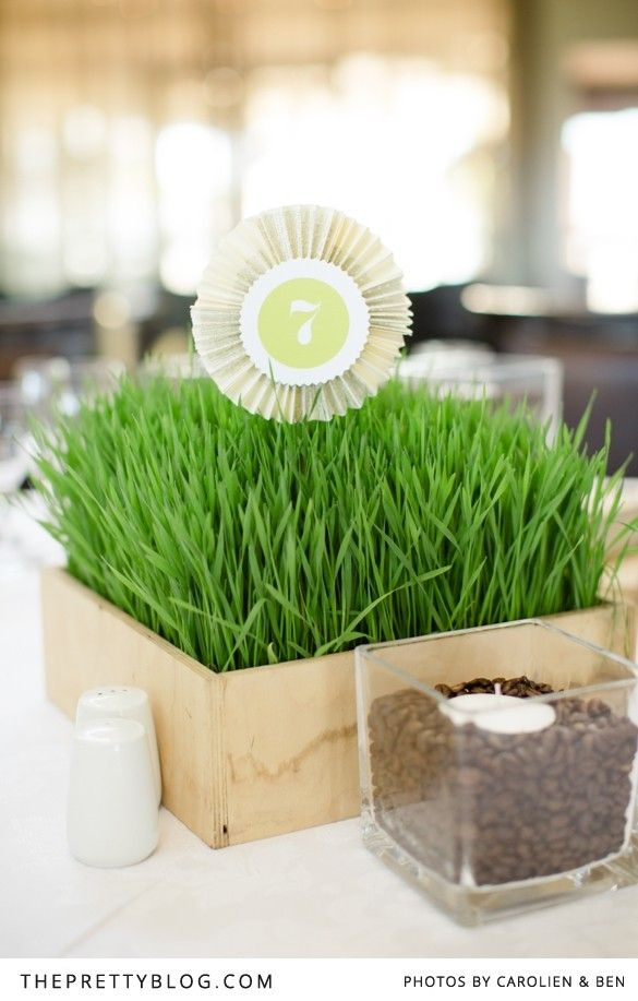 Wheat grass for table decor