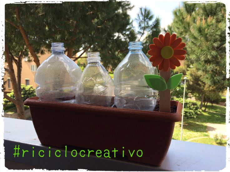 Vaso con semi di calendula Colli di bottiglie fanno da serra Targhetta handmade