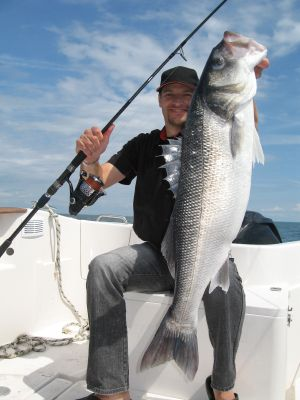 21 best images about striped bass fishing north east on for Long island surf fishing report
