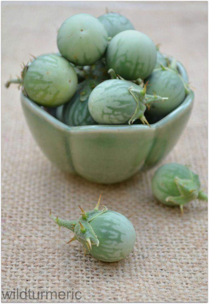 5 Top Benefits & Uses of Kantakari | Kandankathiri | Solanum Xanthocarpum | wildturmeric