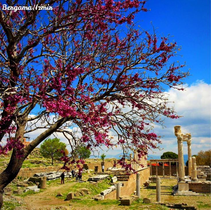別迦摩是安納托利亞古國,現在是土耳其境內貝爾加馬的一處歷史遺蹟。 別迦摩原是米西亞的一座古希臘殖民城邦,距愛琴海約26公里。城市本身坐落在巴克爾河北岸的一個海角上。在亞歷山大大帝的東征之後,地中海地區進入了所謂希臘化時代,別迦摩則在繼業者戰爭之後變成了一個由獨立王公統治的王國。 ©fotografevreni