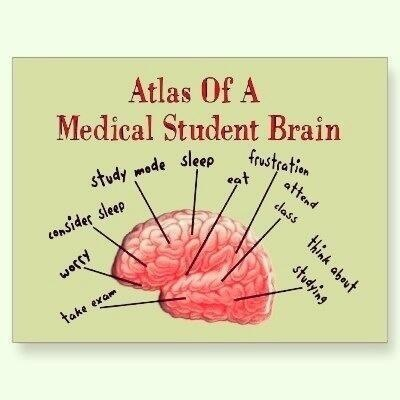A Med Student's Brain
