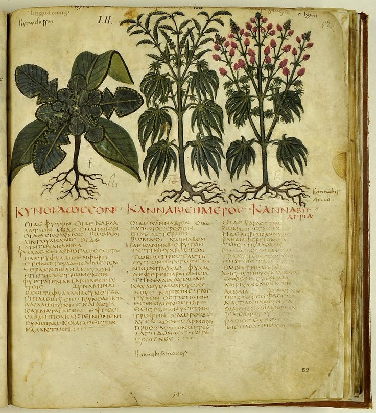 Kannabis - Naples Dioscorides manuscript - VII Century - Of Medical Substances — Viewer — World Digital Library