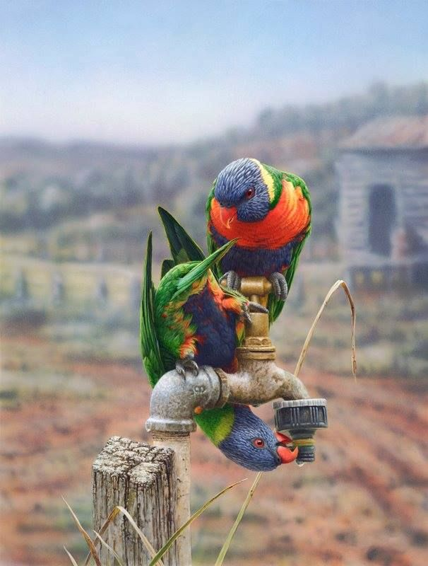 Thirsty Swainson's Lorikeets looking for water.