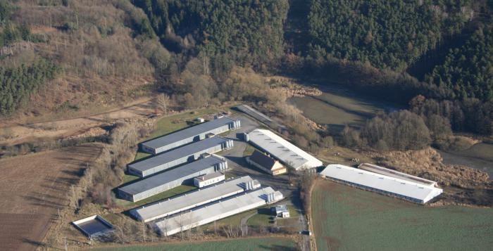 Chov kuřat na české farmě nejen podle norem