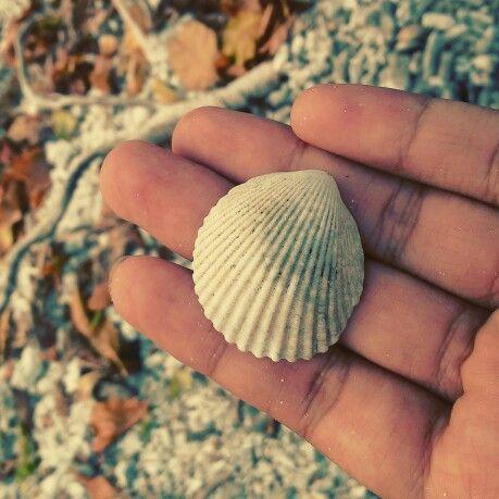 Shell from umang - umang island, lampung