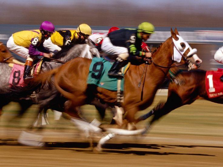 Live horse racing - sports betting gambling handicapping li national gambling counselor certification board