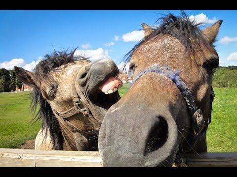Feel Good Sunday: Equine Videos Guaranteed to Make You Smile | Straight from the Horse's Heart