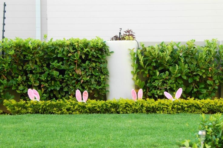 Anyone see the white rabbit.....