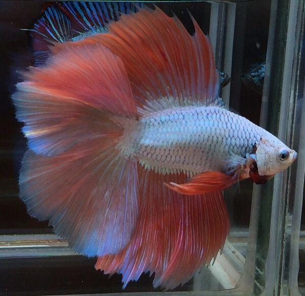 5711 best planted aquarium images on pinterest fish for Best freshwater aquarium fish combination