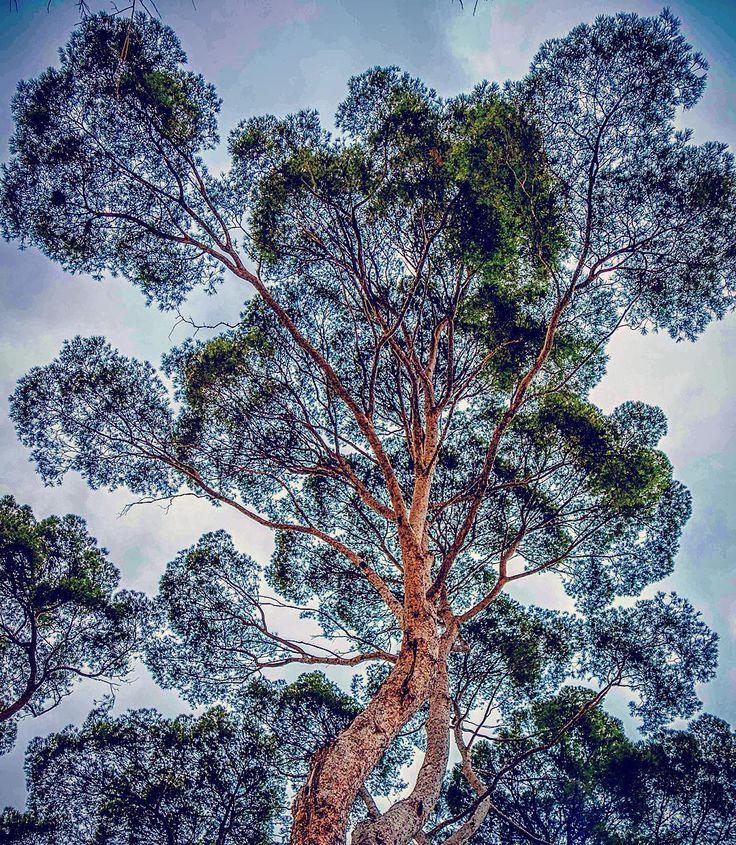 roots fireworks  #tree #arbol #branches #ramas #grow #crecer #big #grande #explosion #nature #naturaleza #backlit