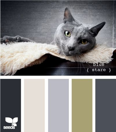 27 Kittenish And Puppyful Color Palettes
