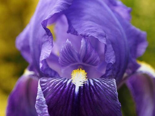 bloemen en andere vreemdsoortige vormen op een koude lentedag