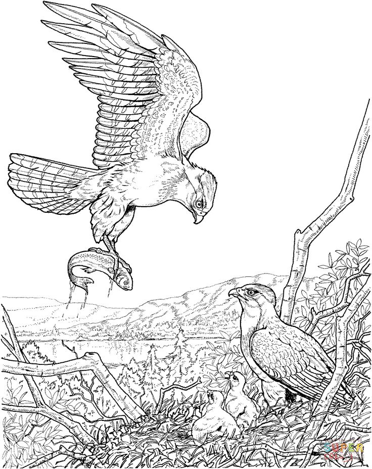 Bald Eagle Catching Fish Coloring Page Sketch Coloring Page