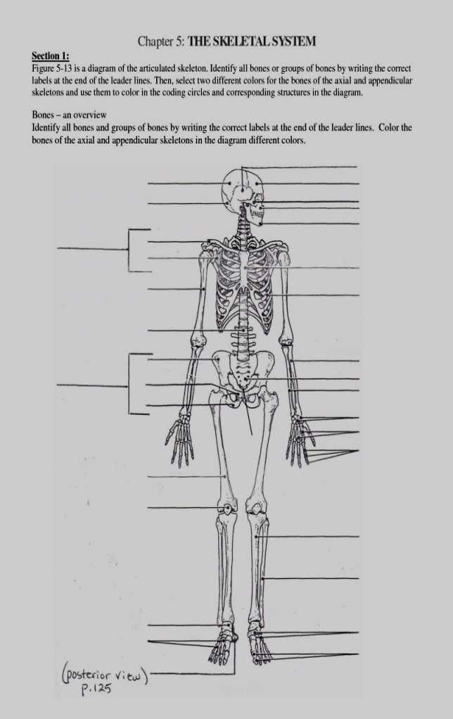 Appendicular Skeleton Anatomy And Physiology Coloring Workbook - Coloring  Walls