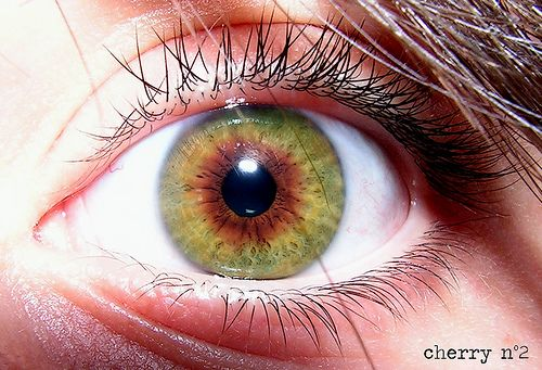 free sles for kids by mail no surveys green eyes with central heterochromia this is my eye 8493