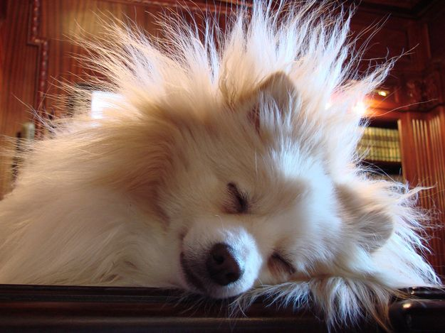 Run a dryer sheet over your dog's fur when there's a storm — chances are, they aren't freaked out about the storm but the static electricity built up in their fur. | 38 Unexpectedly Brilliant Tips For Dog Owners
